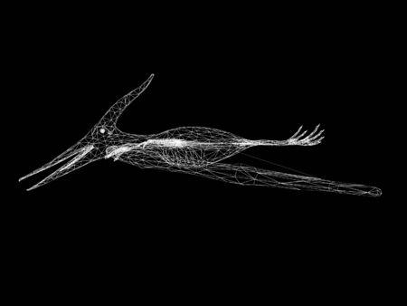 Pterosaur dinosaurs, 3d rendering wire frame