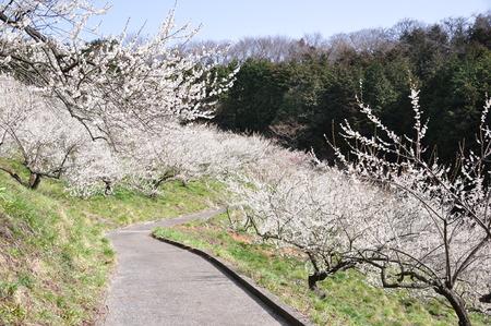 arboleda: Plum Grove