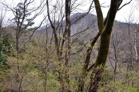silva: Kuki mountains of fresh green.