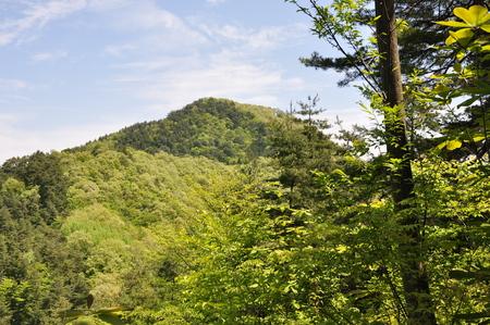 green ridge: Akakura mountains of fresh green.