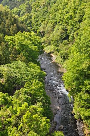 silva: Green River