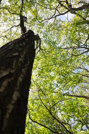 silva: Green forest