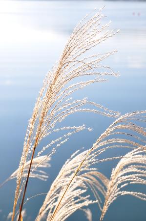 lakeside: Lakeside Awn