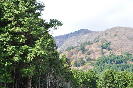 kanagawa: See the lookout from Oyama