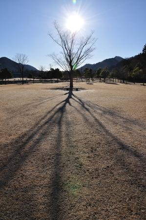 the sun and shade: In the winter sun shade Stock Photo