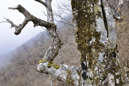 silva: Old trees