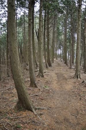 silva: Forest trail Stock Photo