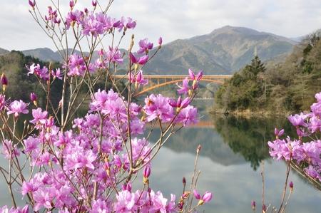 ericaceae: Azalea and the tanzawa mountains, Central Japan