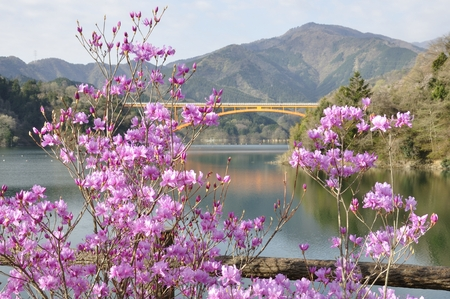 ericaceae: Rhododendron bloom on a Lake Stock Photo