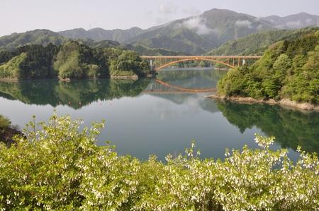 ericaceae: Lake miyagase blooming azaleas: Stock Photo