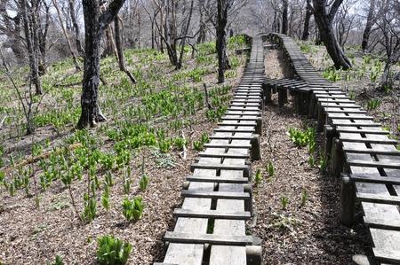 silva: Walkway trail