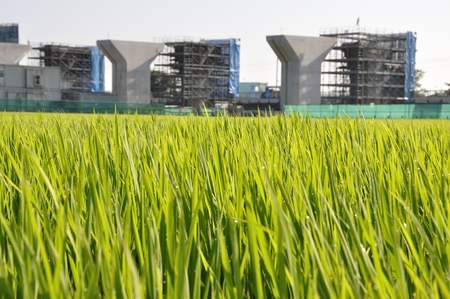 Rice cultivation and construction of Highway Stock Photo