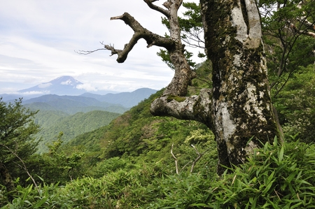 Trees and Mt. Fuji Stock Photo