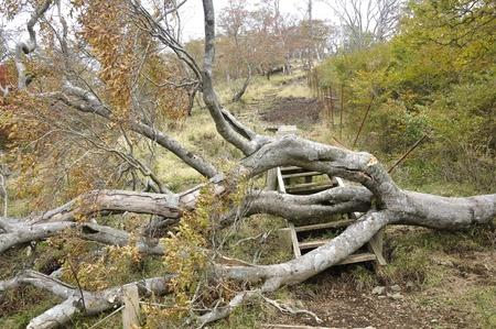 Omgevallen bomen blokkeerden de bergweg