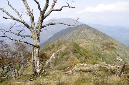 死んだ木と丹沢のレビュー