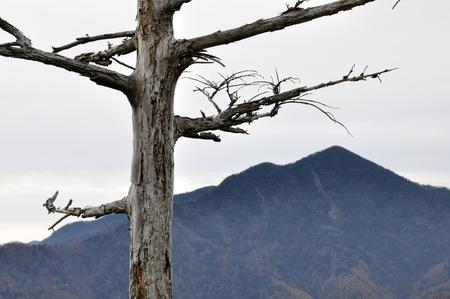 Dead wood and daibosatsurei