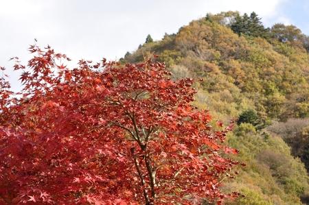 Autumn Lake Palace months torrent