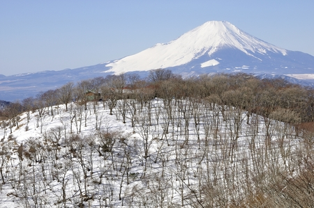 mountain shoot from the mountains of Mt. Fuji Stock Photo