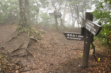 Signpost in the fog.