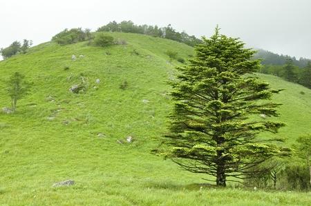 Shiratani round meadow 写真素材
