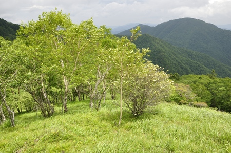 Betula ermanii and wild goose month belly sliding mountain