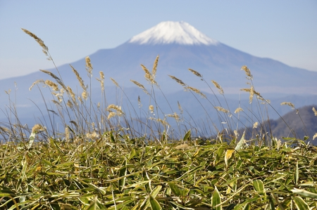 Mt. Fuji from tanzawa Sasahara