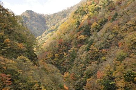 U-Shin Valley autumn leaves Archivio Fotografico