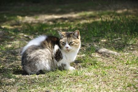 Sun Cat Mariko Stock Photo