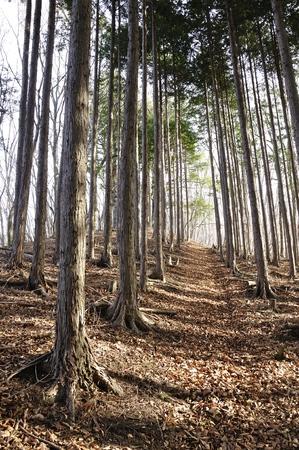 Trail of afforestation belt
