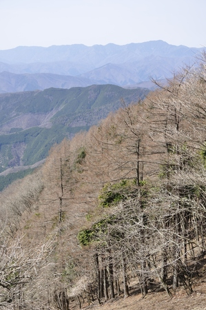 Okutama Hawk-Suyama views-daibosatsurei 版權商用圖片