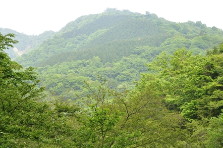 Ichihara Shinto road ridge around fresh green