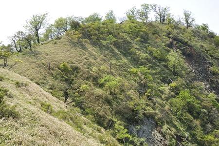 Tanzawa principal fresh green no Onigawa no head 写真素材