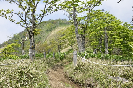 Climbing path to climb Mount Hikigatake 写真素材