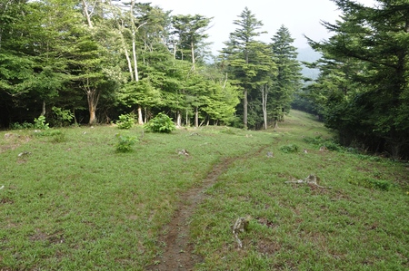 Mountain path of the firefighting belt of Takikoyama