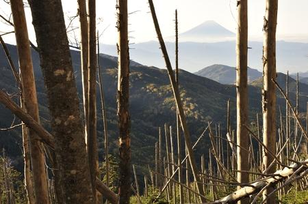 Fuji in the morning sun and the fallen tree Foto de archivo
