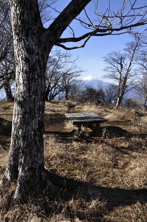 Cypress hinokiboramaru peaks than Mount Fuji.