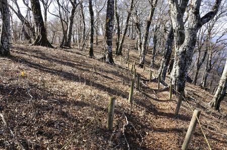 Autumn tanzawa mountain trail