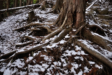 Snow piles up in the woods of winter