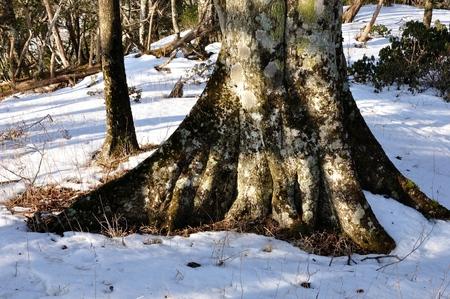 Snowy Mountains forest Banco de Imagens