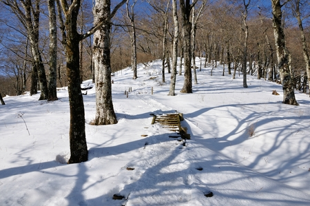 Snow-filled forest trails