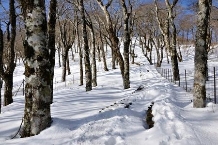 Follow the walkway of snow