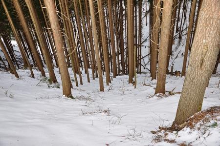 Falling snow on tree planting 写真素材