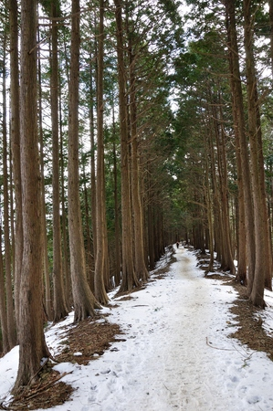 Okura Ridge forest