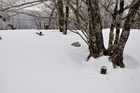 Cypress-Dong, round snow 写真素材