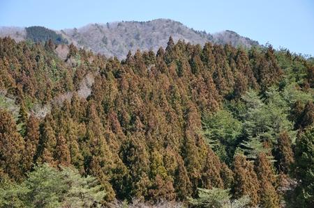 Spring bird-heart mountain 写真素材