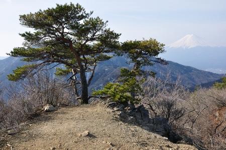 Fuji with pine Stock Photo