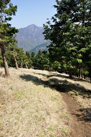 Cypress forest on Mount Hiru