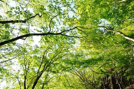 Pot % mountain forest fresh green