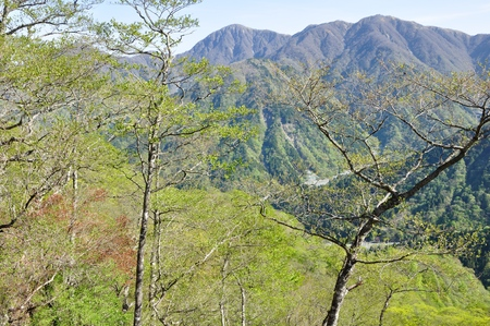 Tanzawa mountains in spring