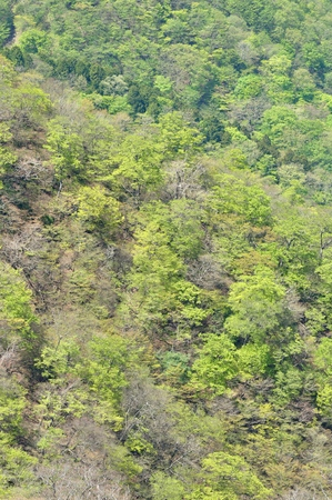 Mountain of the tanzawa mountains Green